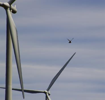 seabird and wind turbine