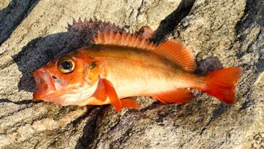 redfish on beach